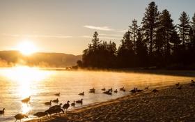 Картинка пейзаж, природа, туман, озеро, утки, утро