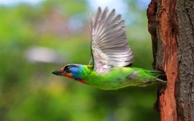 Обои дерево, птица, крылья, летит