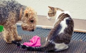Картинка кошка, взгляд, собака