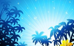 Обои море, небо, пальмы