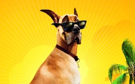Обои желтый, пальма, дерево, собака, очки, дог, мармадюк