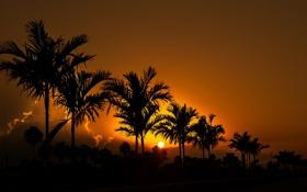 Обои небо, солнце, закат, пальма, вечер, силуэт