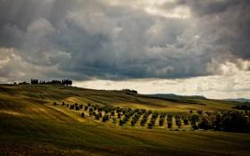 Обои поле, небо, облака, долина, сады
