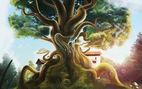 Обои птицы, корни, дерево, грибы, домик