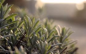 Картинка листья, растение, зеленые