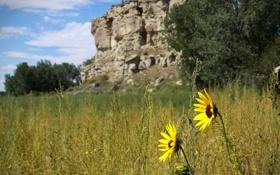 Обои поле, цветы, горы, природа