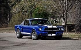 Обои Ford, Mustang, шелби, форд, мустанг, 1966, GT350R