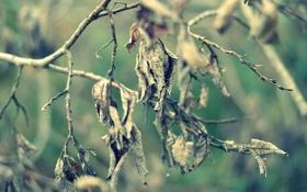 Обои листья, осень, ветки, ветви, сухие, дерево