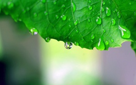 Обои листья, капли, обои, зелёный, макро фото, green macro