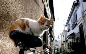 Обои кот, рыжий, велосипед