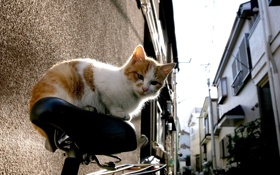 Картинка кот, велосипед, рыжий