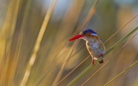 Картинка трава, макро, красный, природа, птица, клюв