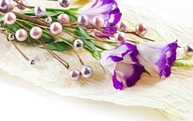 Обои фиолетовые, сиреневые цветы, цветы