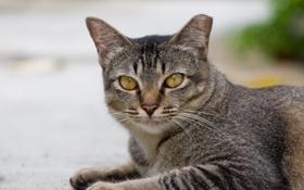 Обои котэ, cat, улица