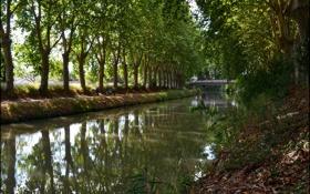 Обои люди, деревья, canal du midi, мост, парк, канал, франция