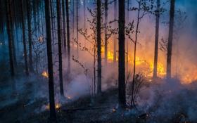 Картинка лес, пожар, огонь, дым