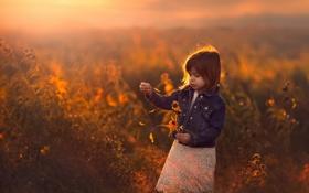 Картинка закат, поле, цветы, девочка