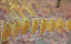 Обои листья, ветка, желтые