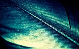 Обои блеск, quill, цвет, перламутровое, macro, feather, макро