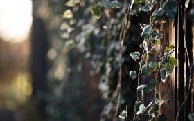 Обои ветки, природа, блики, листва