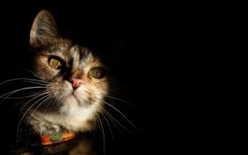Картинка кошка, взгляд, свет, тень