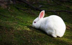 Картинка трава, белый, ветки, резкость, кролик