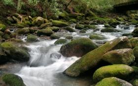 Картинка лес, река, камни, мох, поток