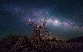 Картинка космос, звезды, ночь, пространство, дерево, млечный путь