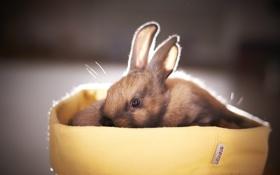 Обои фон, кролик, Little Bunny