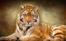 Обои дикая кошка, текстура, тигр