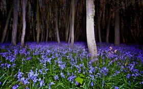 Картинка цветы, ночь, весна