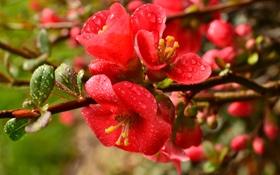 Обои цветы, ветки, природа, яркие, лепестки, листочки