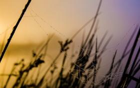 Обои природа, паутина, фон