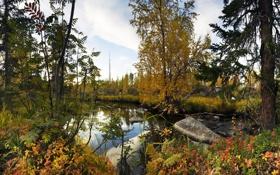Картинка осень, ручей, мончегорск