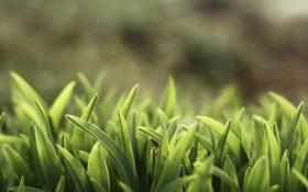 Обои зелень, макро, свет, размытие, Трава