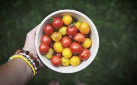 Картинка помидоры, много, томаты