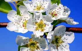 Обои небо, макро, цветы, весна, лепестки, сад