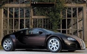 Картинка стиль, veyron, bugatti, оранжерея