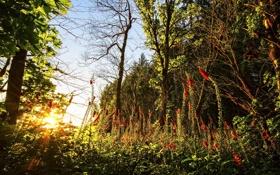 Картинка лес, небо, деревья, цветы