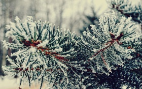 Картинка зима, снег, иголки, елка, ветка