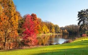 Обои листья, деревья, пейзаж, природа, озеро, trees, landscape