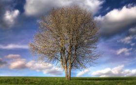 Картинка поле, небо, трава, природа, дерево, цвет, весна