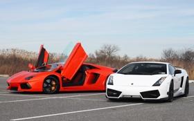 Обои белый, оранжевый, парковка, white, lamborghini, orange, aventador