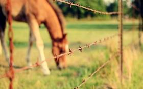 Картинка лошадь, забор, проволока