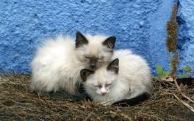 Обои кошки, фон, стена
