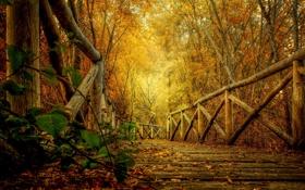 Обои осень, лес, листья, деревья, природа, парк, HDR