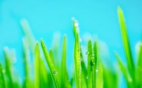 Обои трава, капли, яркость