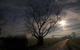 Картинка утро, дорога, дерево