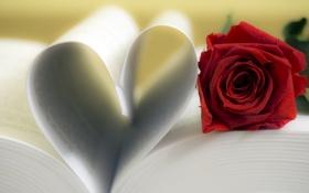Картинка сердце, роза, книга, red, love, rose, flower