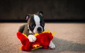 Обои игрушка, собака, щенок